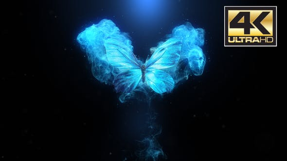 Flying Butterfly Logo Reveal 4k