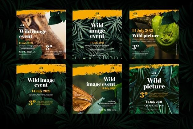 Wild nature instagram posts Premium Vector
